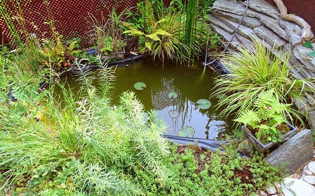 bassin de jardin 1 an plus tard